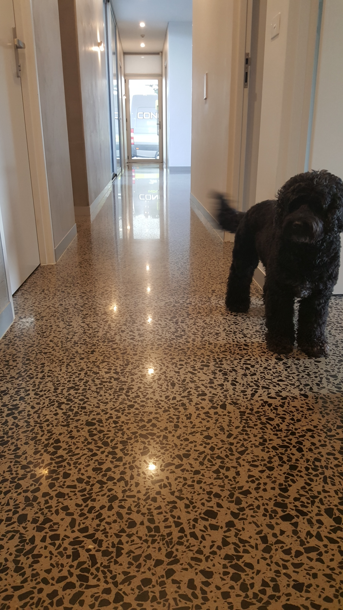 Reasons why concrete floors are pet friendly eco grind Friendly floors